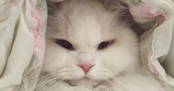 可憐的小流浪貓被好心人收養,長大後竟然這麼美