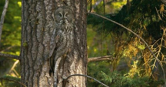 懂隱身的動物,大自然的絕妙設計