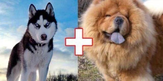 10隻超可愛的狗狗混血兒