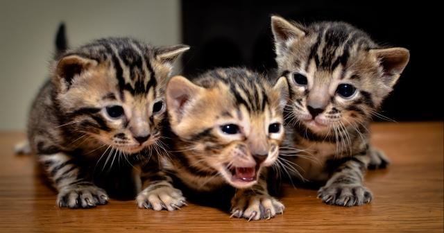 十種趣緻的野生動物Baby